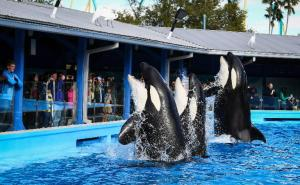 os-seaworld-shamu-up-close-20140107-002