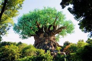 Disneys-Animal-Kingdom-6-613x407