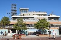1_paddlefish