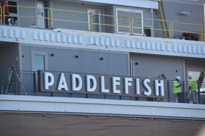 7_paddlefish