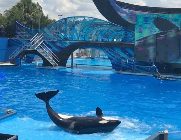 morte-orca-kayla-seaworld.jpg